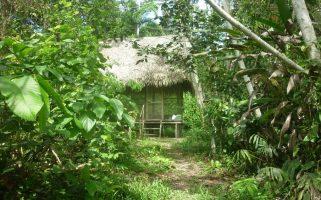 Icarohut in amazone